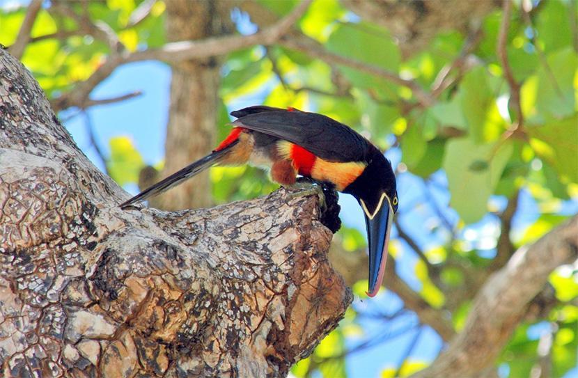 Costa Rica – Fugleelskeres farverige paradis