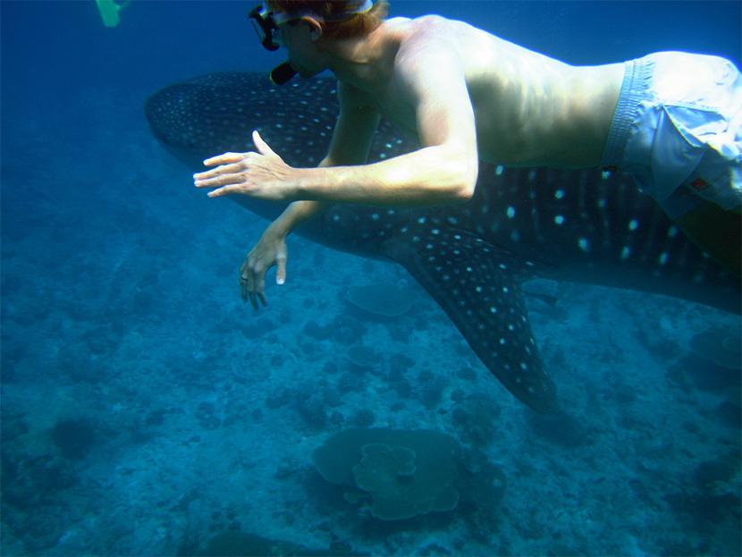 Filippinerne/Mexico – Verdens største haj