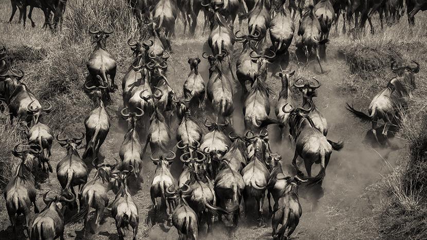 Kenya/Tanzania - Den store vandring
