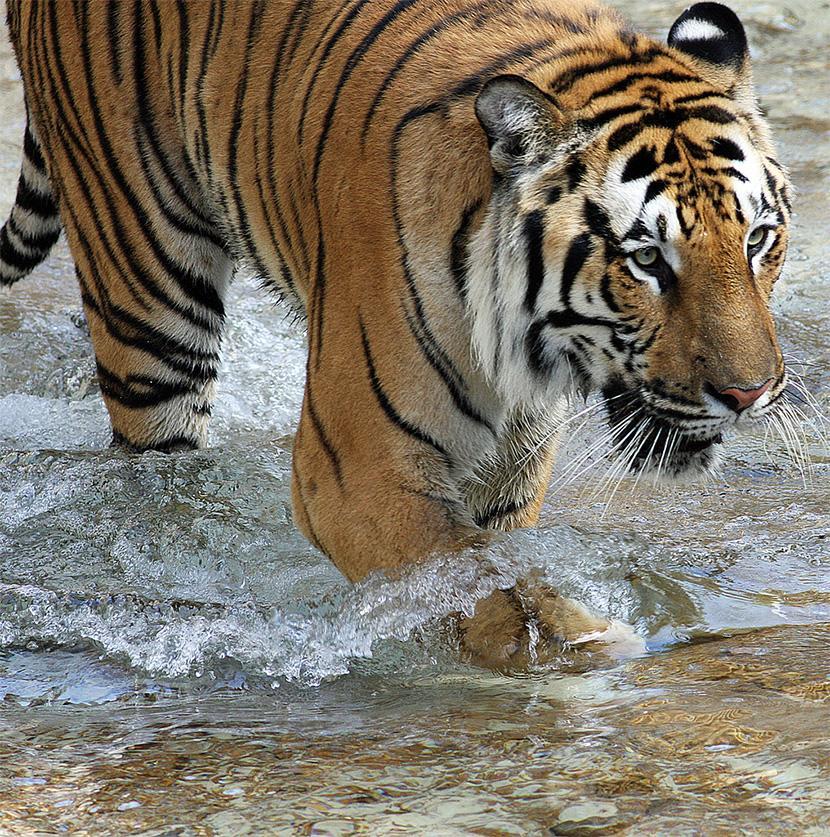 Nepal – På 'jagt' efter tigeren i Chitwan