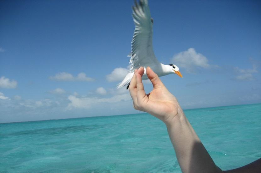 Fugl på sejltur i Mexico