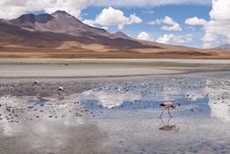 Bolivia på juleaften langt hjemmefra