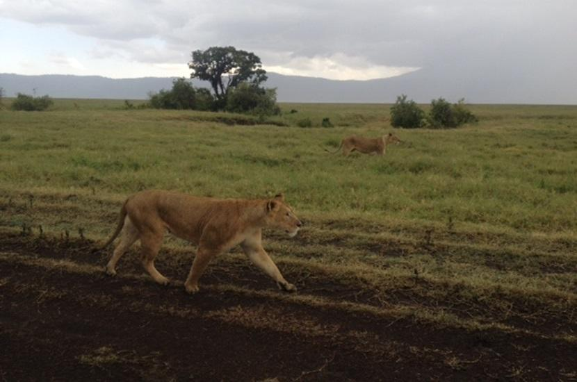 Annes tur til Tanzania