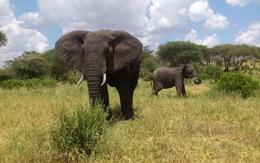 Tag med Anne til Tanzania og Zanzibar