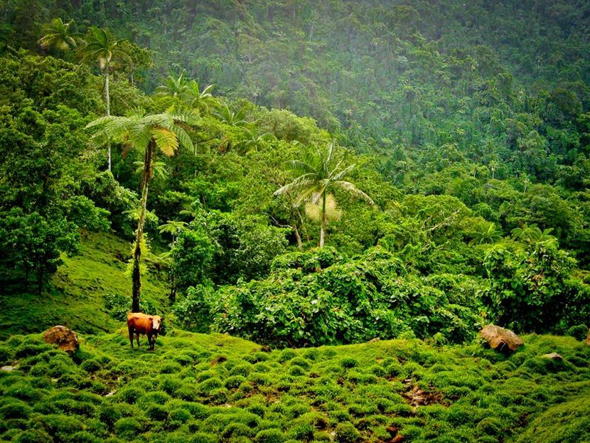 Landskabet er evigt grønt i Samoa