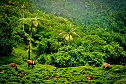 Grøn, grønnere, Samoa!