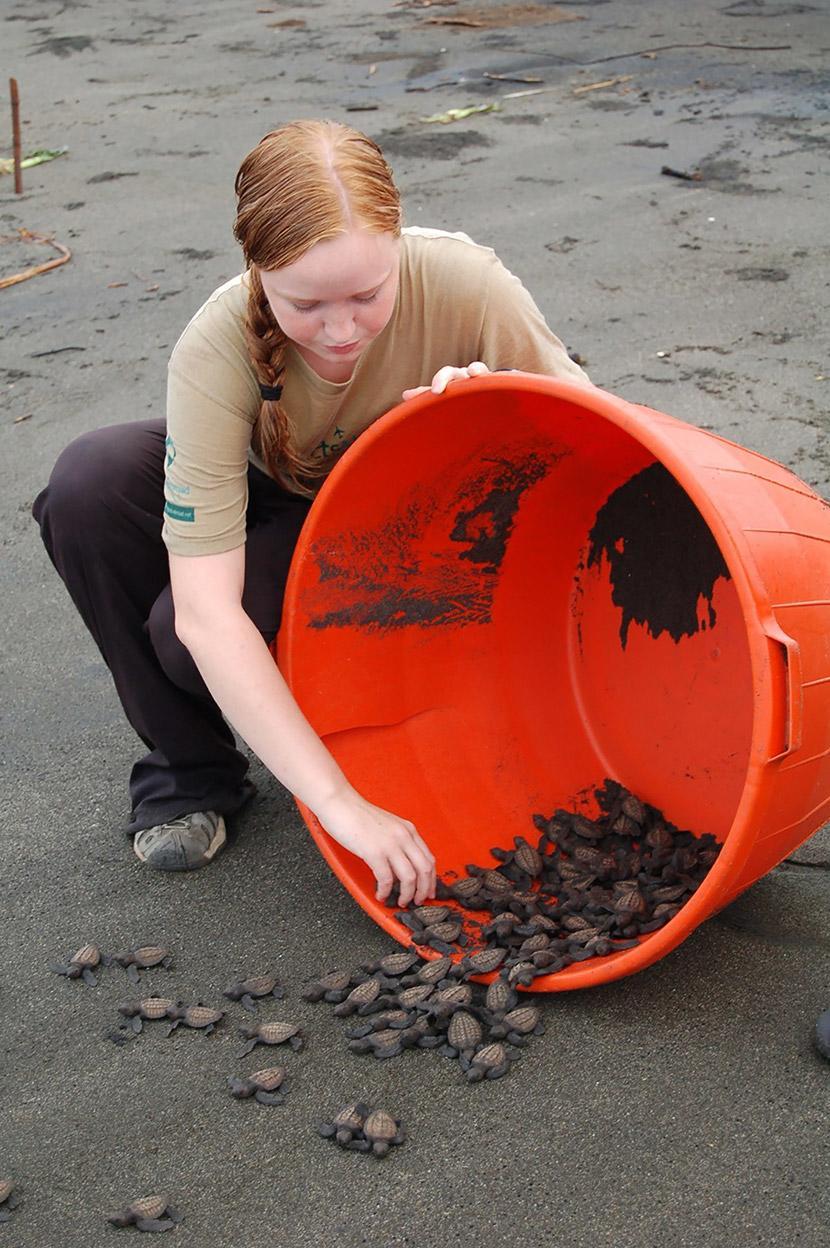 Vapaaehtoinen vapauttaa kilpikonnanpoikasia Merikilpikonnien suojeluhankkeessa Meksikossa