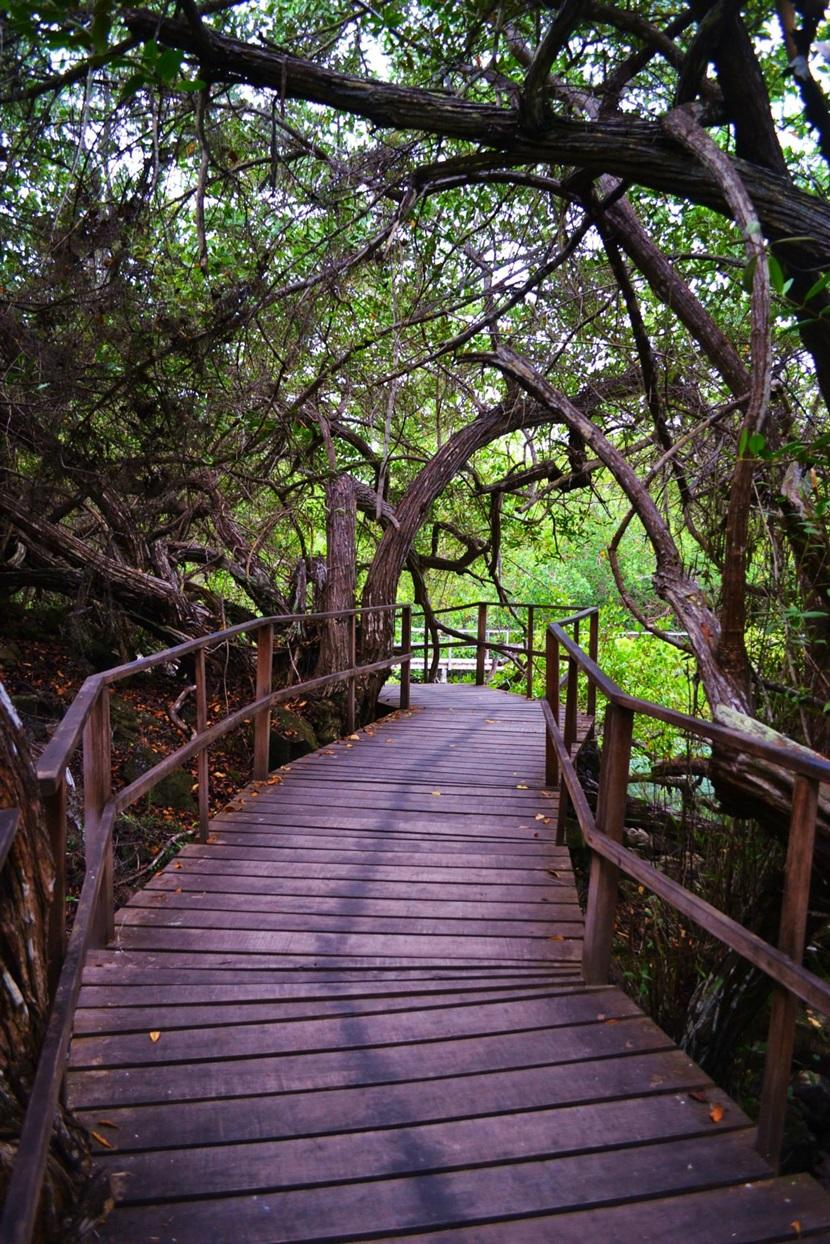 percorso-foresta