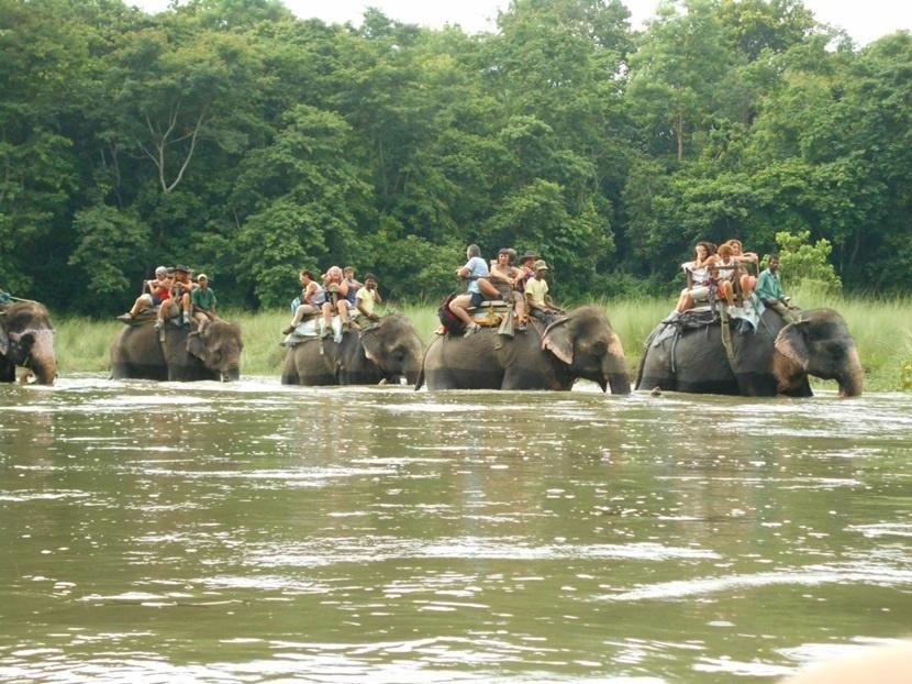 Elefanti costretti a trasportare fino a cinque persone