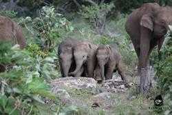 Gite a cavallo degli elefanti: tutto quello che avrei voluto sapere