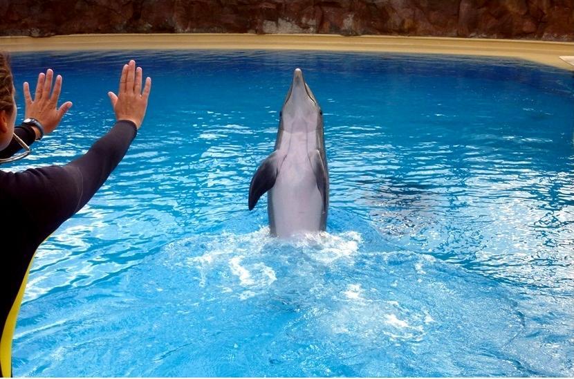 Un delfino durante l'addestramento
