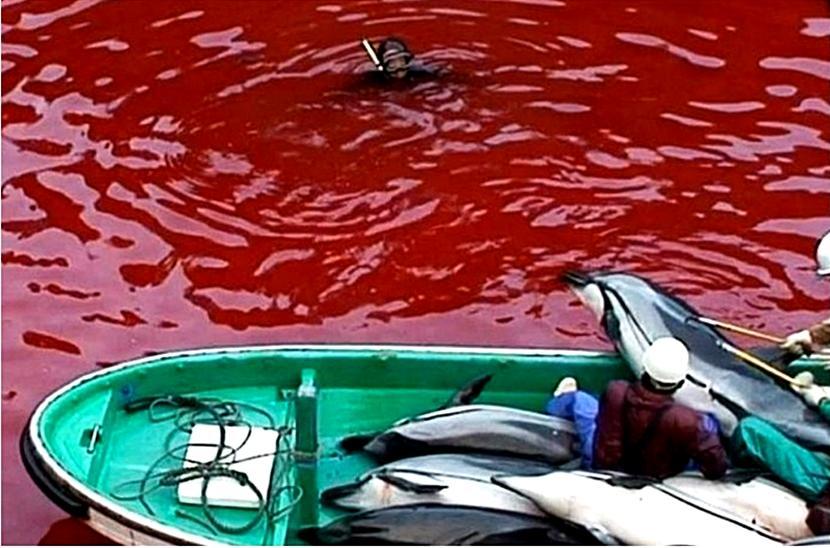 Il massacro di delfini in Giappone