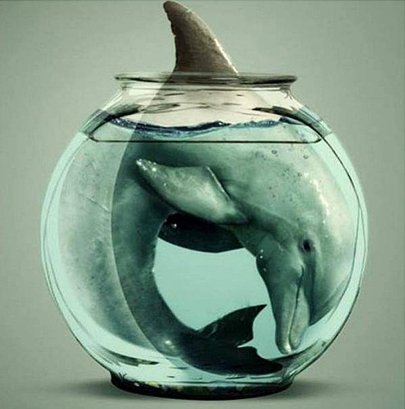 Quello che prova un delfino in cattività