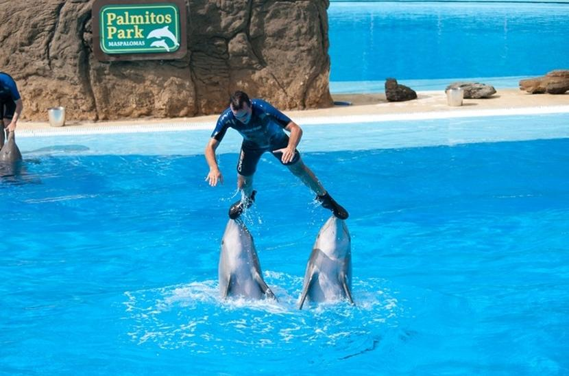 delfini durante uno spettacolo
