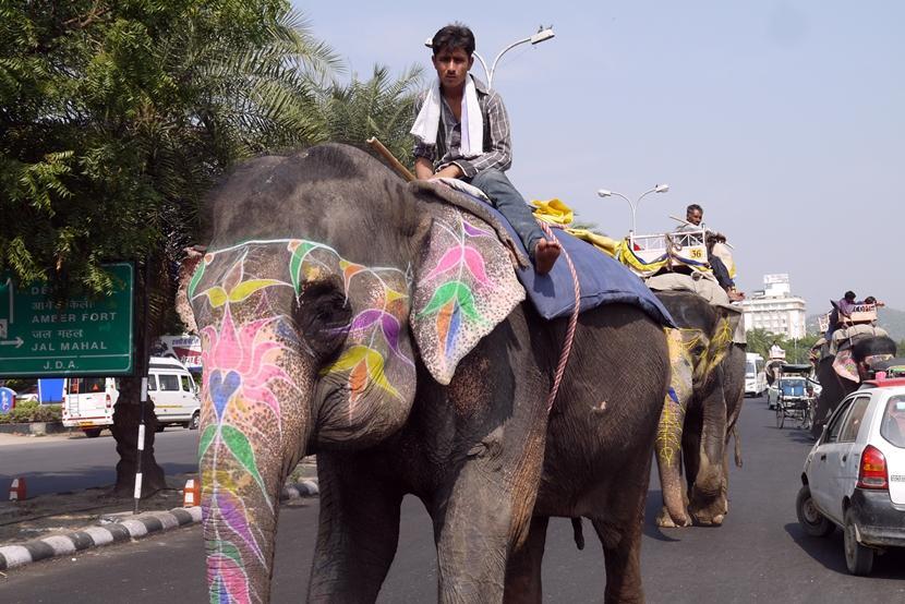 Gita sulle spalle di un elefante