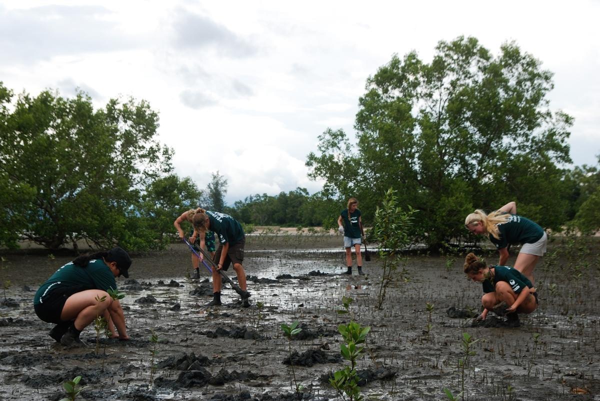 I ragazzi del campo di volontariato ambientale in Thailandia impegnati nel piantare mangrovie