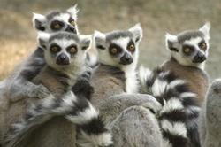 マダガスカルを知ろう!
