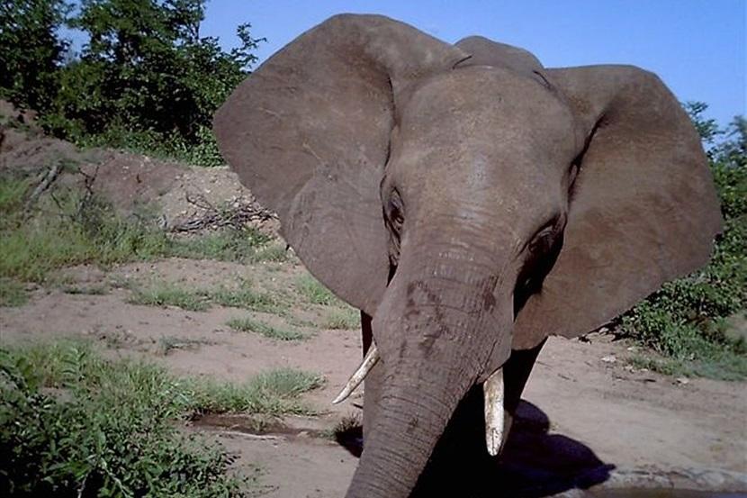 Verborgen camera foto's van dieren op natuurbehoud projecten van Projects Abroad