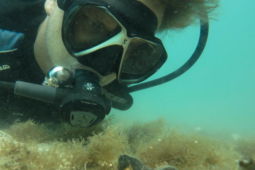 Projects Abroad vrijwilliger vindt een zeepaardje tijdens een duik