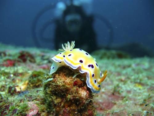 Natuurbehoud Vrijwilligers ontdekken een zeeslak