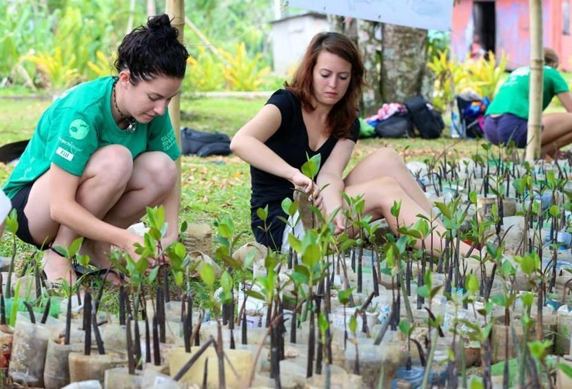 Tijdens het natuurbehoud project in Fiji planten vrijwilligers jonge mangroven.