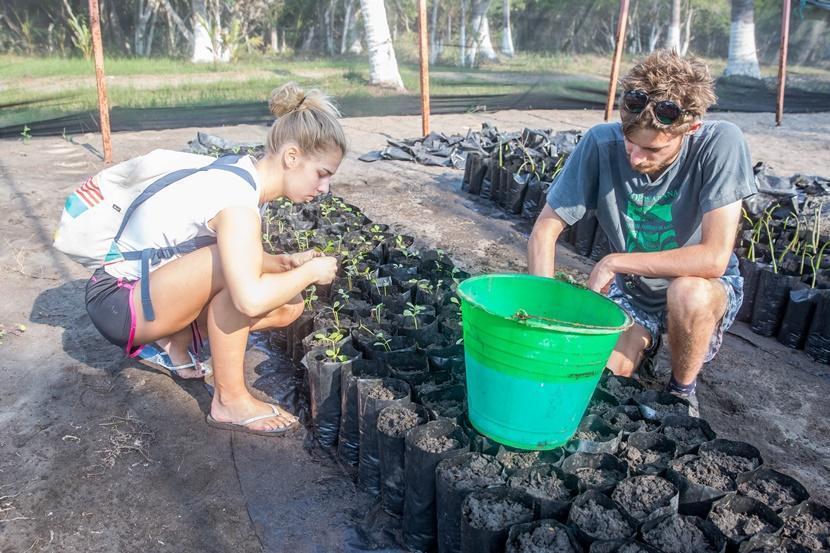 Vrijwilliger in Mexico helpt bij het planten van mangroven