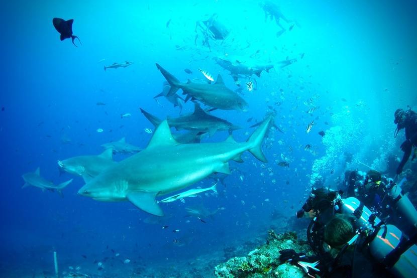 Vrijwilligers van de jongerenreis naar Fiji observeren haaien tijdens hun duik.