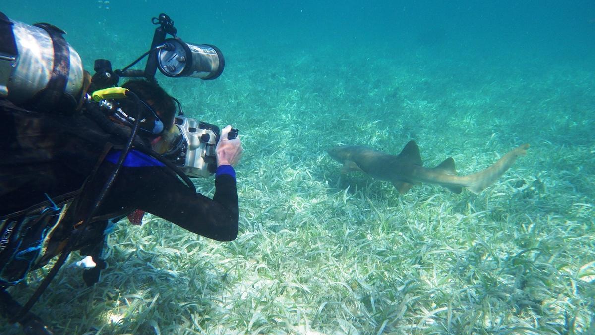 Een duiker fotografeert een haai tijdens een groepsreis voor jongeren in Belize