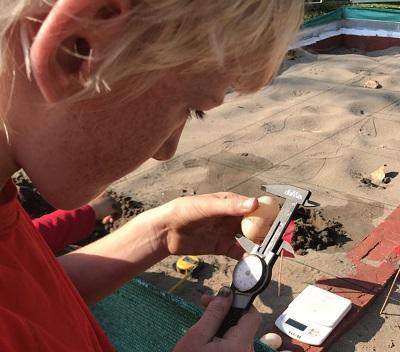 Zoon Gilles meet de schildpad eieren op het natuurbehoud project in Peru