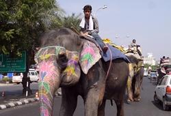 Tänk efter före innan du bidrar till misskötsel av vilda djur | Projects Abroad