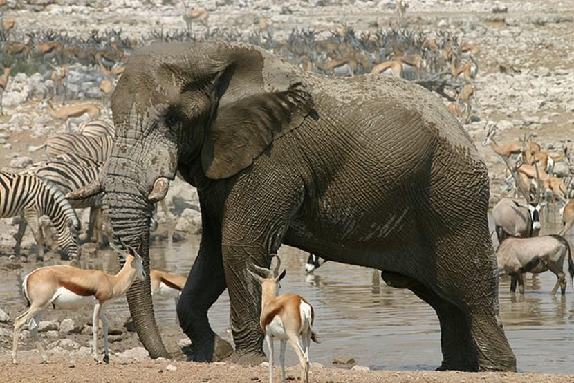 Wildlife in Etosha National Park