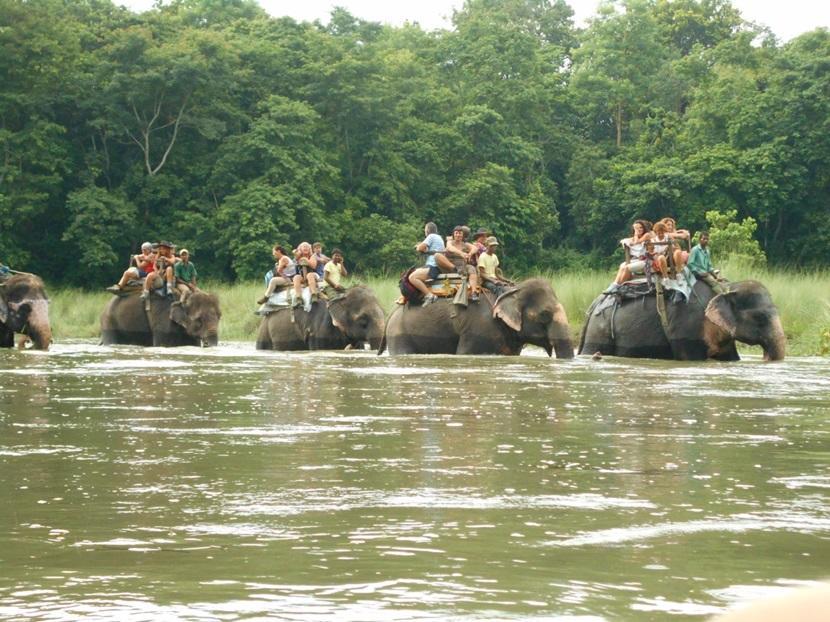 Elephant rides in Chitwan