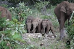 Elephant Rides: What I Wish I'd Known