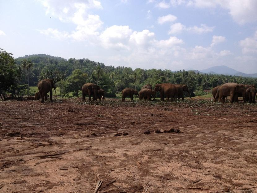Visiting the elephants