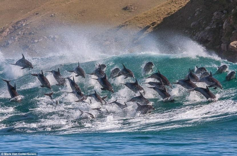 Swimming with dolphins: Time to kick it off the bucket list?