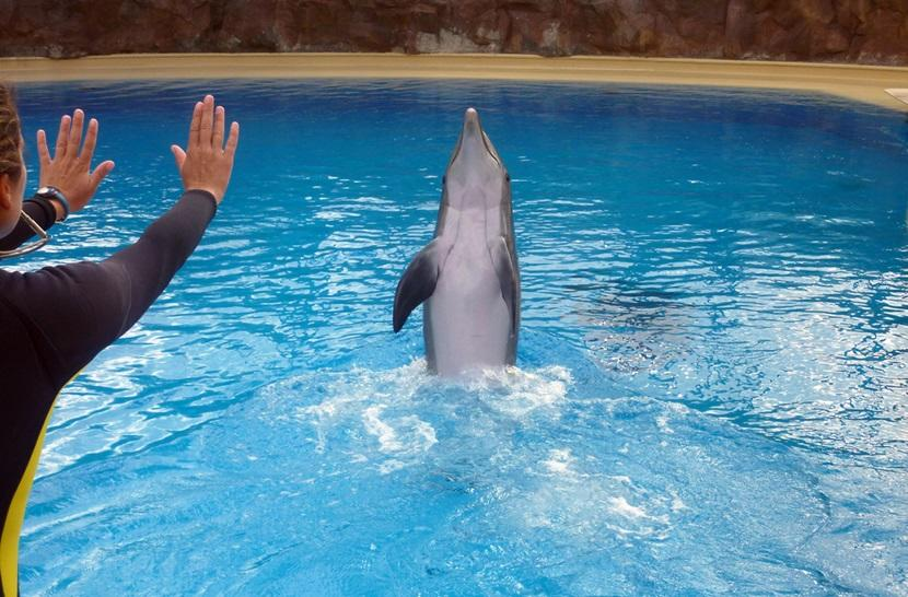 Dolphin training