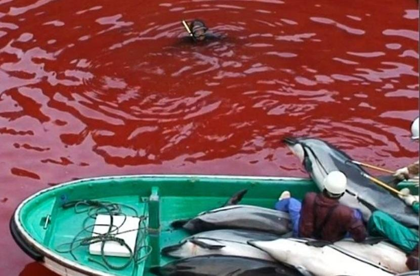 Dolphin slaughter in Japan