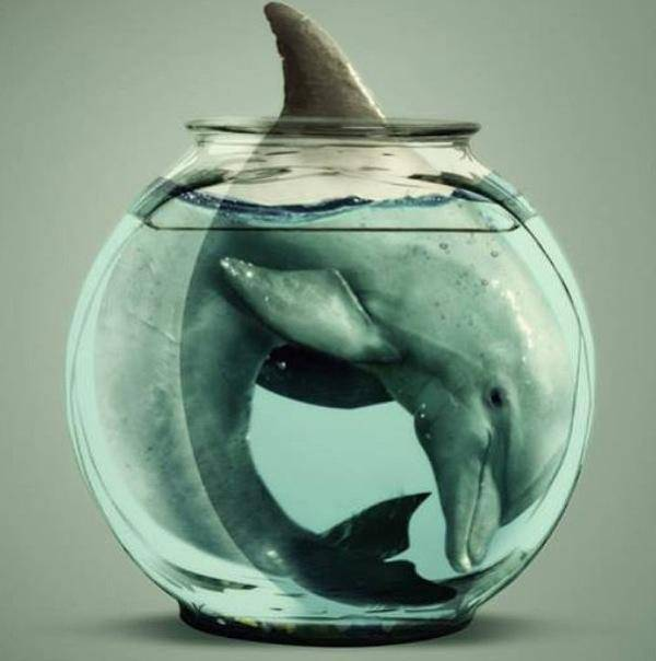 How a dolphin feels in captivity
