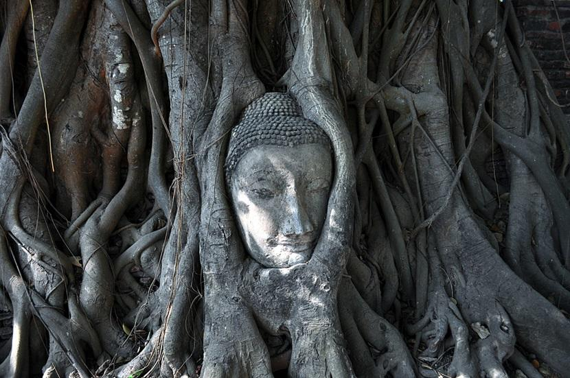 Buddha's head in Ayutthaya