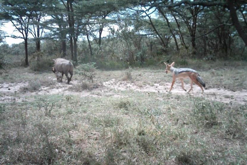 Kenya Warthog and Jackal