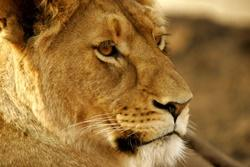 "Cuddling Cubs – Discover The Darker Side Of Big Cat ""Conservation"""
