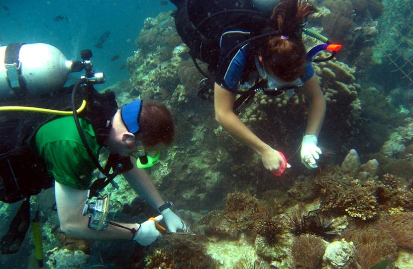 Volunteers exploring a coral reef