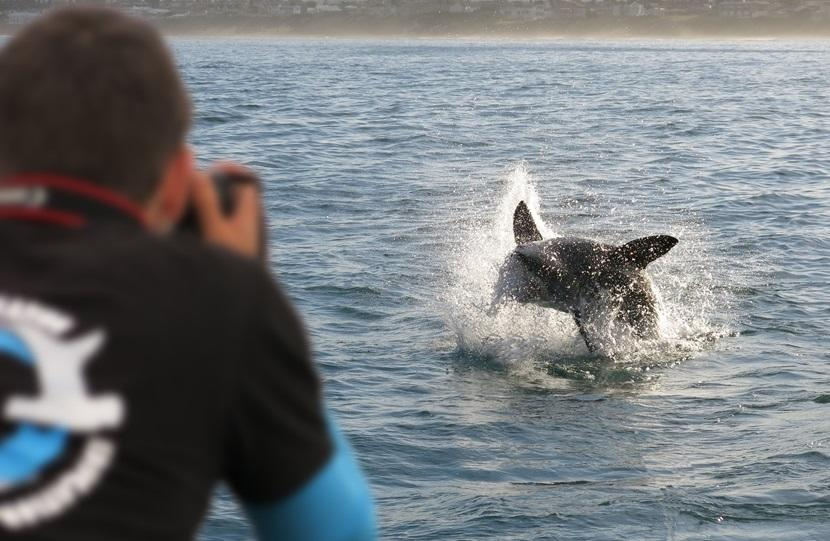 A shark breaches while a man takes a picture