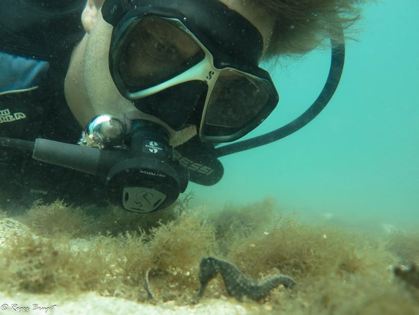 A diver inspects a seahorse