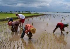Khmerprojekt i Cambodja