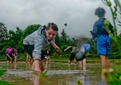 Volunteers in Vietnam doing community work in a rice paddy to support local artisans of Southeast Asia