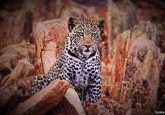 Naturbevaring i Sydafrika