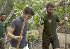 Projects Abroad volunteers move trees to be planted as part of a reforestation program in Costa Rica.