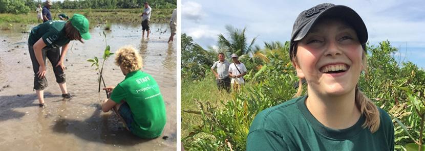 Mangrove restoration site