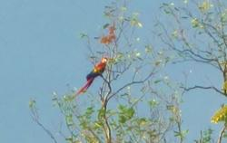 Macaw project
